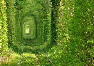 Terowongan cinta (Ukraina)