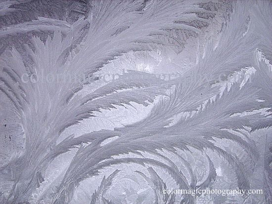 Ice crystal flowers- beautiful frost pattern