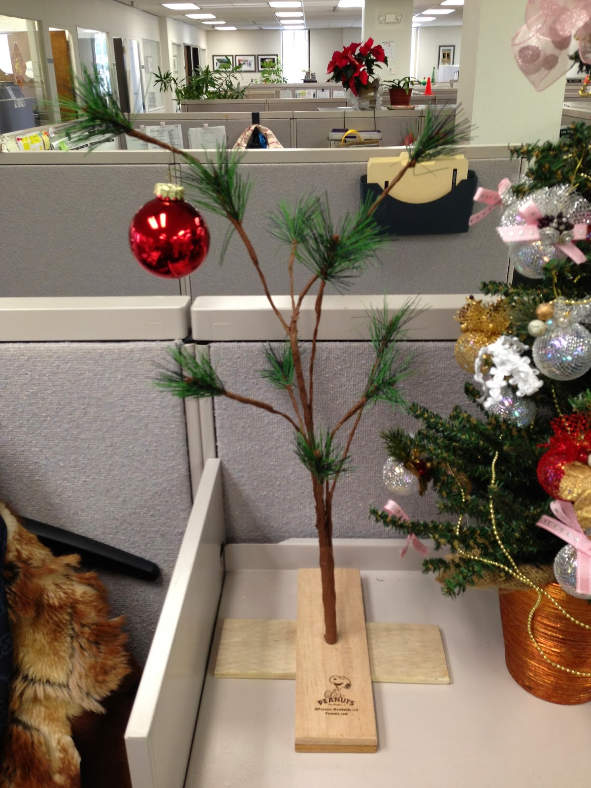 my charlie brown christmas tree compliments of cvs