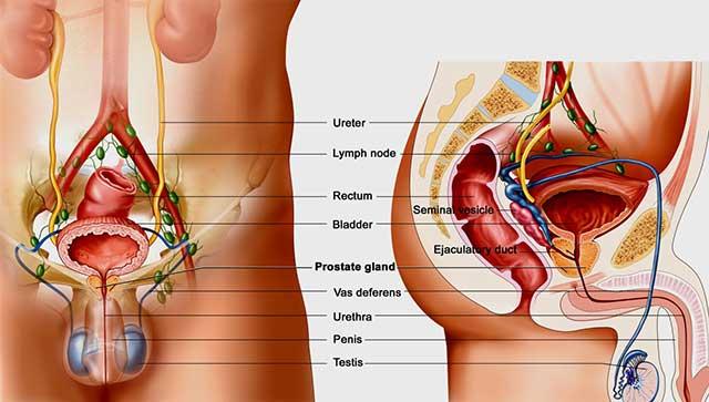Minyak ikan picu gejala kanker prostat