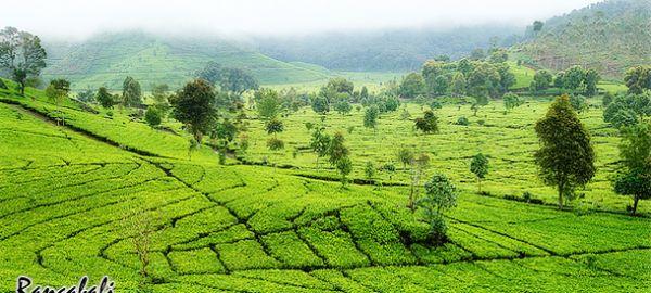 Pemandangan Taman Wisata Rancabali