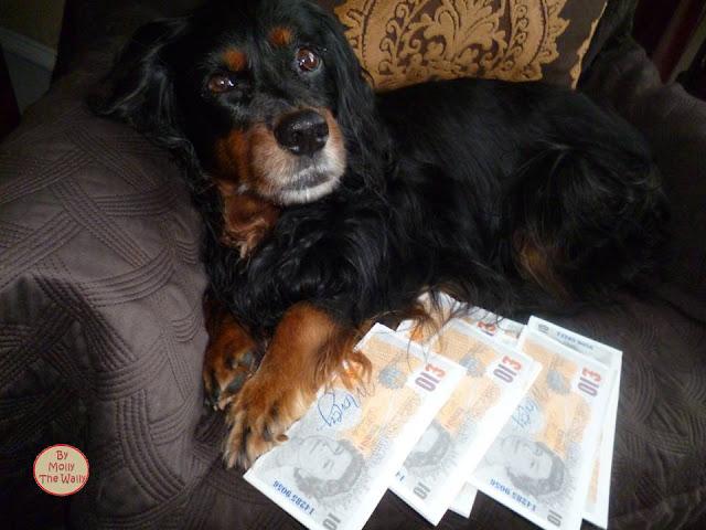 Molly The Wally & Money!