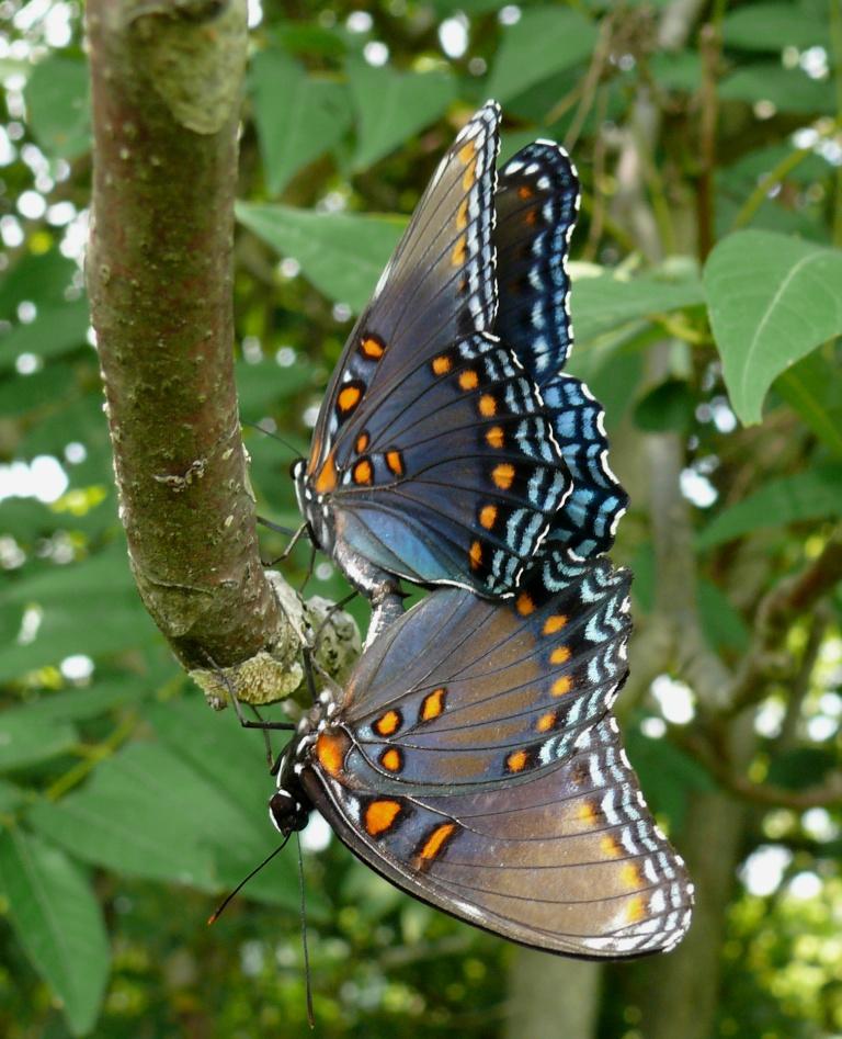 Ohio Birds And Biodiversity  Ugly Caterpillar   Beautiful