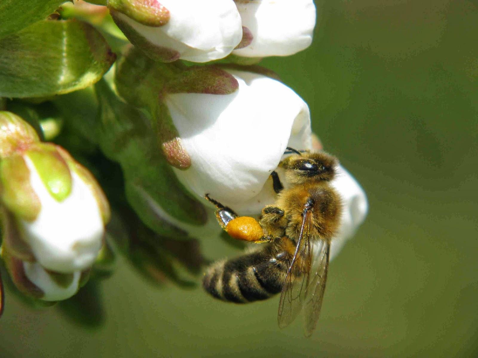 elte bild vortrag im zauber der bl tenwelt mit bienen bl ht das leben am 3 april. Black Bedroom Furniture Sets. Home Design Ideas