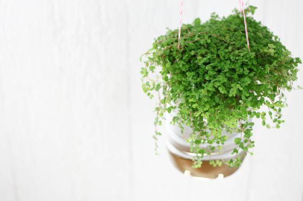 Aus der alten Plastikflasche wird ein toller DIY Hängetopf für Zimmerpflanzen.