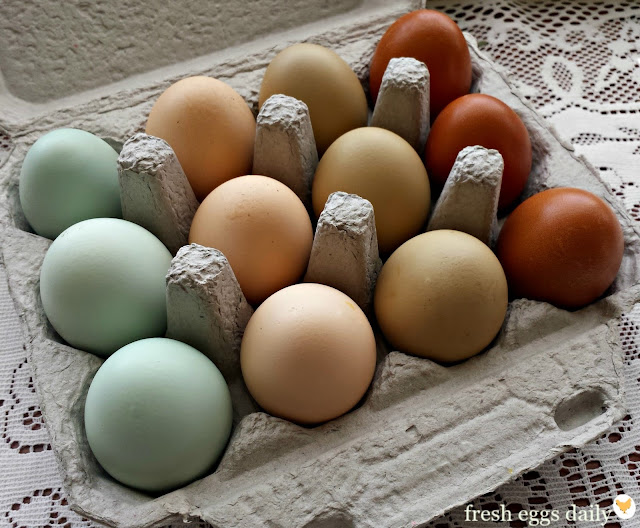 Black Copper Marans Egg Color Chart 97691 Trendnet