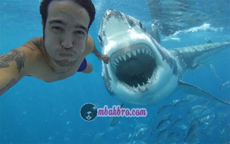 selfie bersama ikan hiu