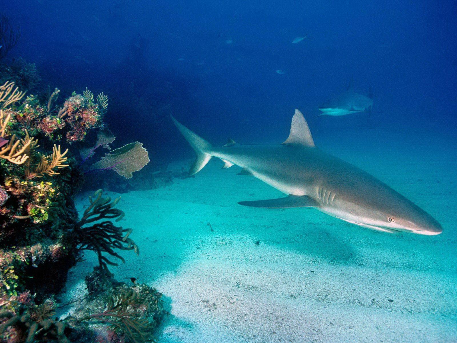 R Fisheries Fish R: Shark Fish