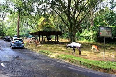 hotel taman safari puncak