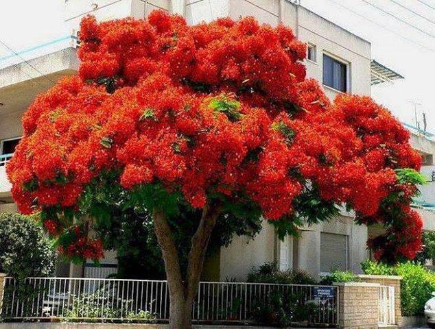 Not cias de rol ndia pr rvore mais linda do mundo for Arbol rojo jardin