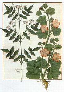 Herbario francés del siglo XVI