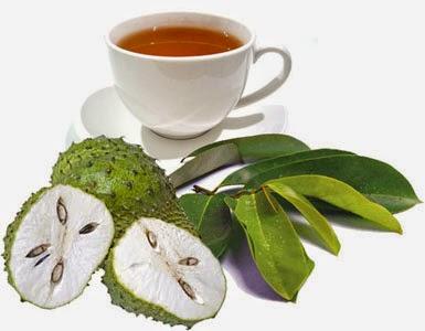 obat tradisional kanker serviks daun sirsak