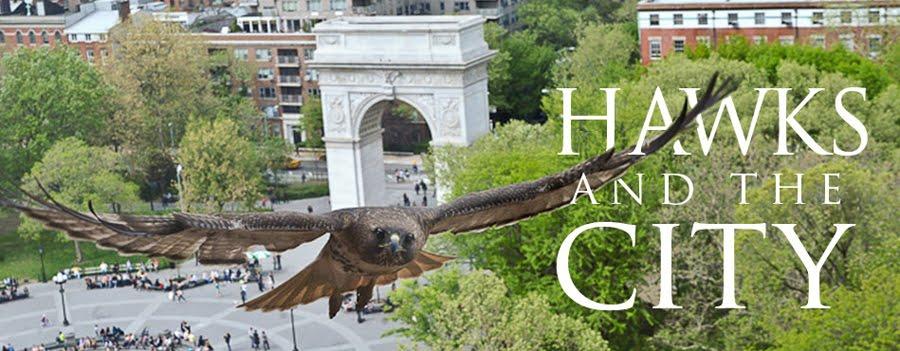 WSP Hawks