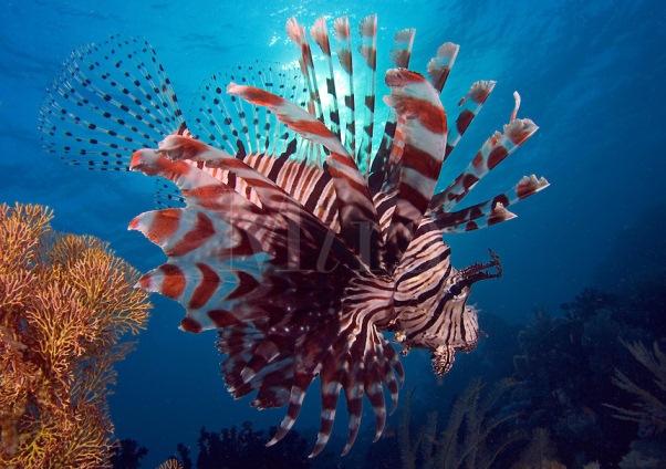D' Ocean Aquarium: Lio...