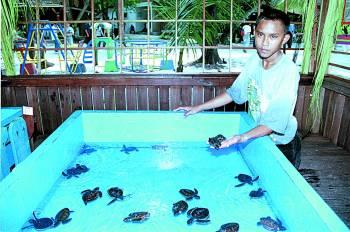 Serangan Turtle Island