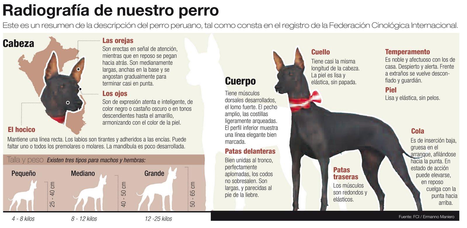 El perro peruano / The Peruvian dog
