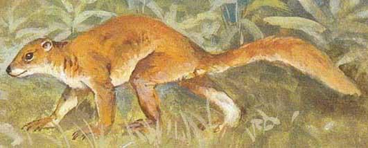 primates extintos Plesiadapis
