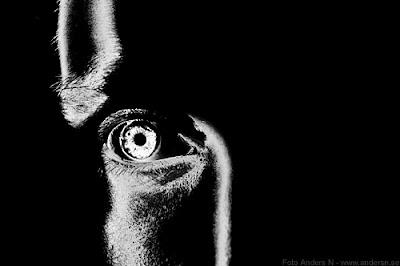 eye, öga, skarpsynt, foto anders n