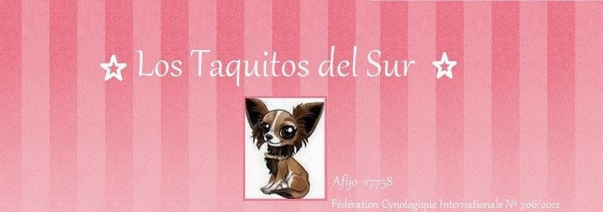 Chihuahuas Taquitos del sur