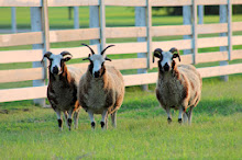 Visit our Sheep Site