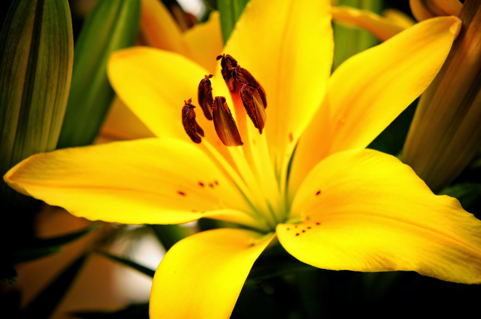 unedited public domain picture of a beautiful yellow flower