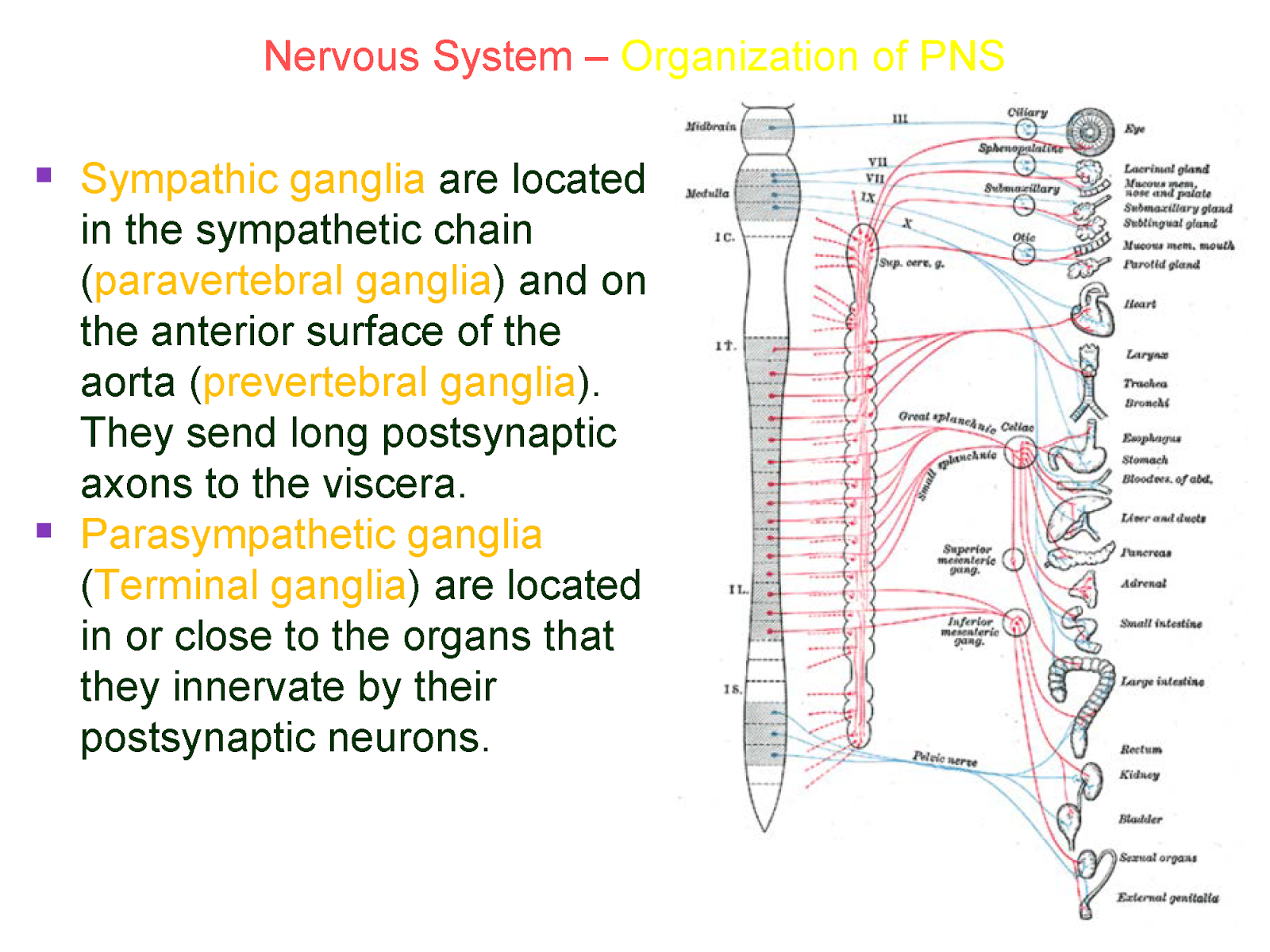 a p ii nervous tissue 2016-1-14 chapter 11: nervous system ii: divisions of the nervous system 11-1 objectives: 1 outline the major divisions of the nervous.