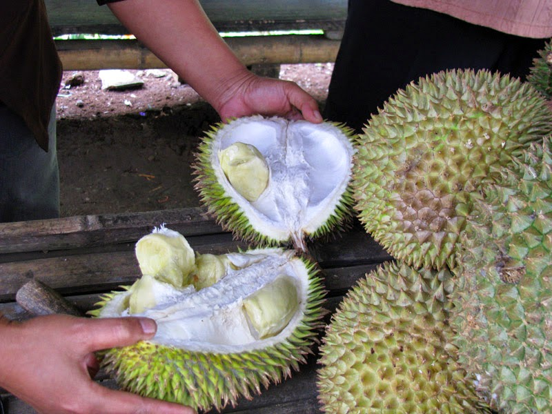 Happy Us Book - Indonésie - Durian