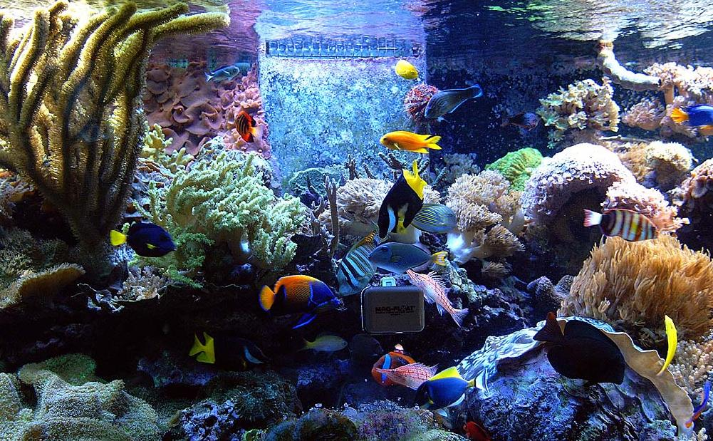 Tropical Aquarium Fish