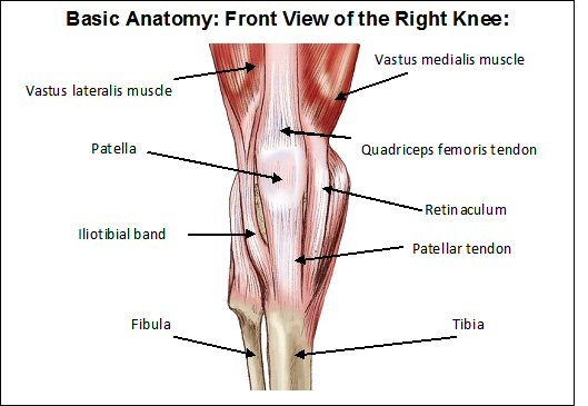 Human body organs: Human Anatomy Diagram Knee