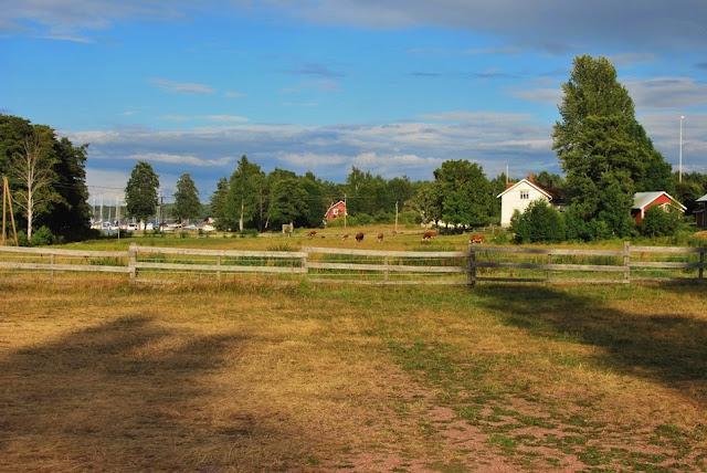 Högsåra - Näkymä kyläraitilta lehmihakaan ja vierasvenesatamaan