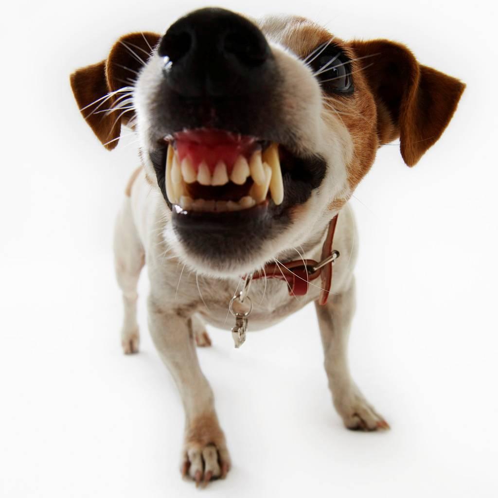 Dog Lightly Bites