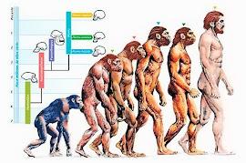 ADAPTACIÓN Y EVOLUCIÓN