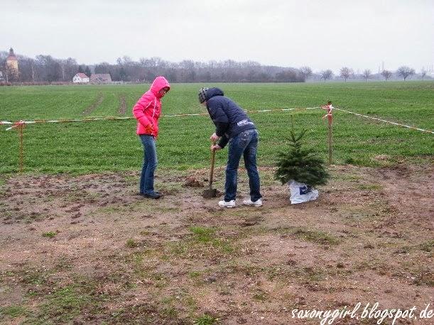 saxony girl weihnachtsbaum ausgepflanzt. Black Bedroom Furniture Sets. Home Design Ideas