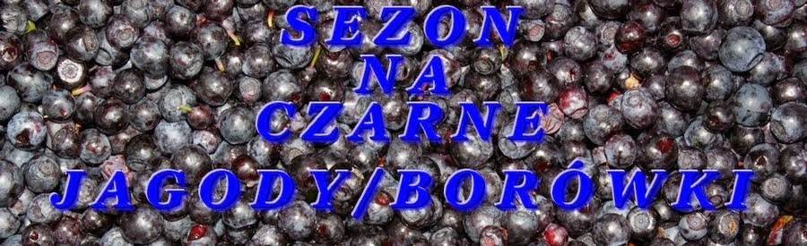 Sezon-Na-Czarne-Jagody-Borówki
