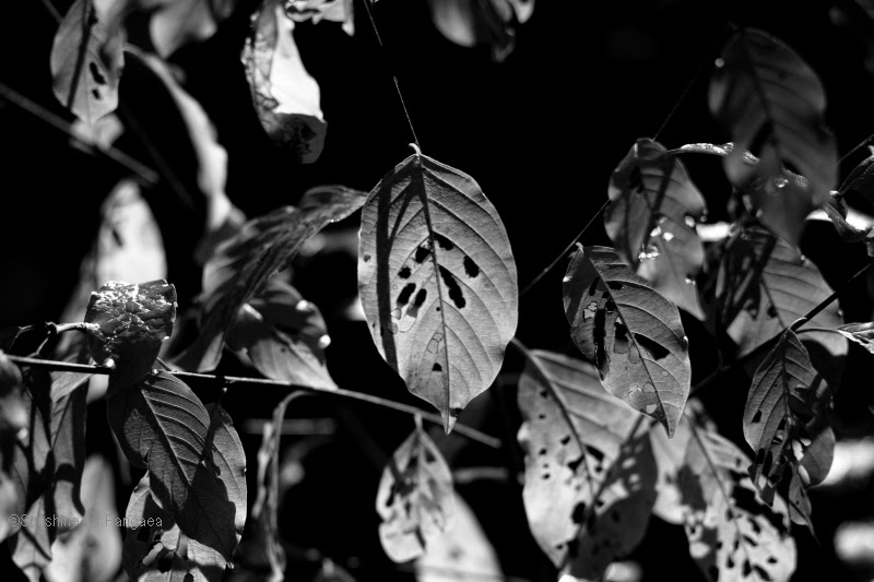 Black and white photo of leaves in the shadow