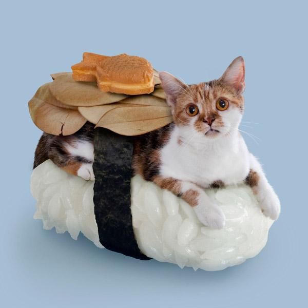 сделали еду иду из кошки