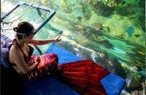 Kehidupan Putri Duyung Di Marine Park Tiongkok