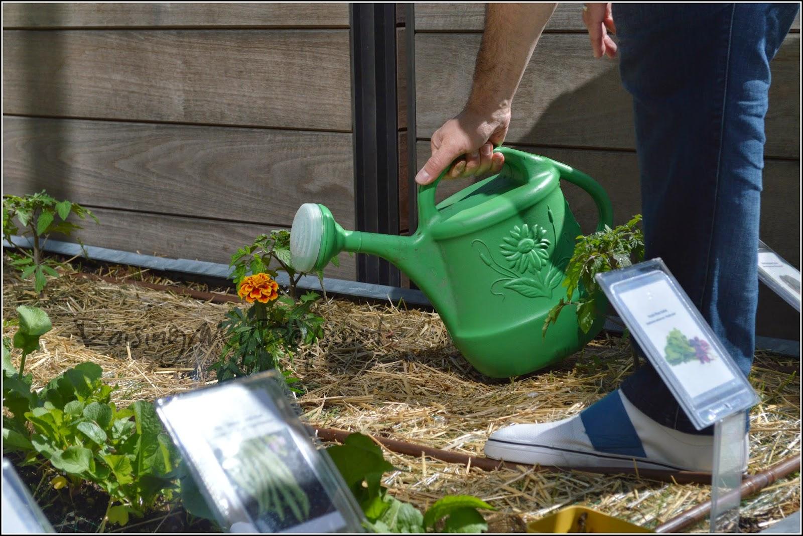 TELUS Green Team watering garden