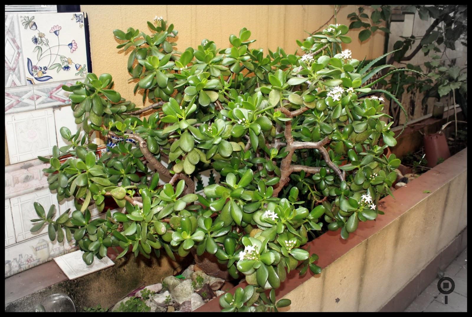 El patio de mi casa plantas de invierno en mi patio - Plantas de invierno ...