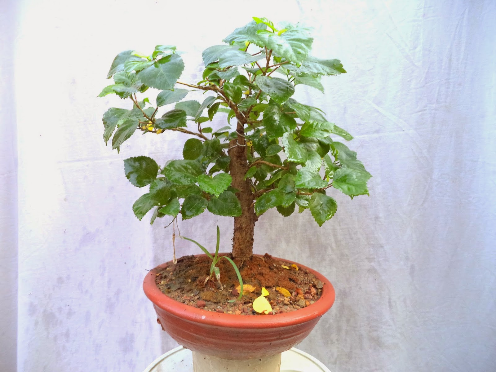 Mammal Bonsai