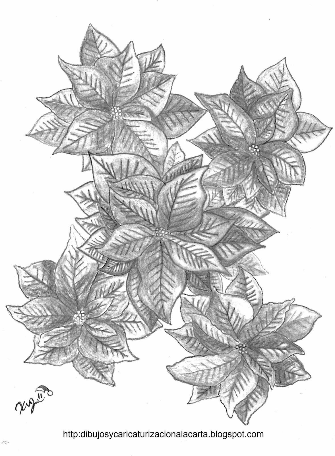 dibujos y caricaturizacion a la carta Flor de Nochebuena dibujo a