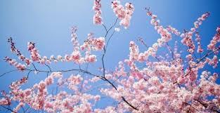 Llegó la primavera, viva la vida¡¡¡
