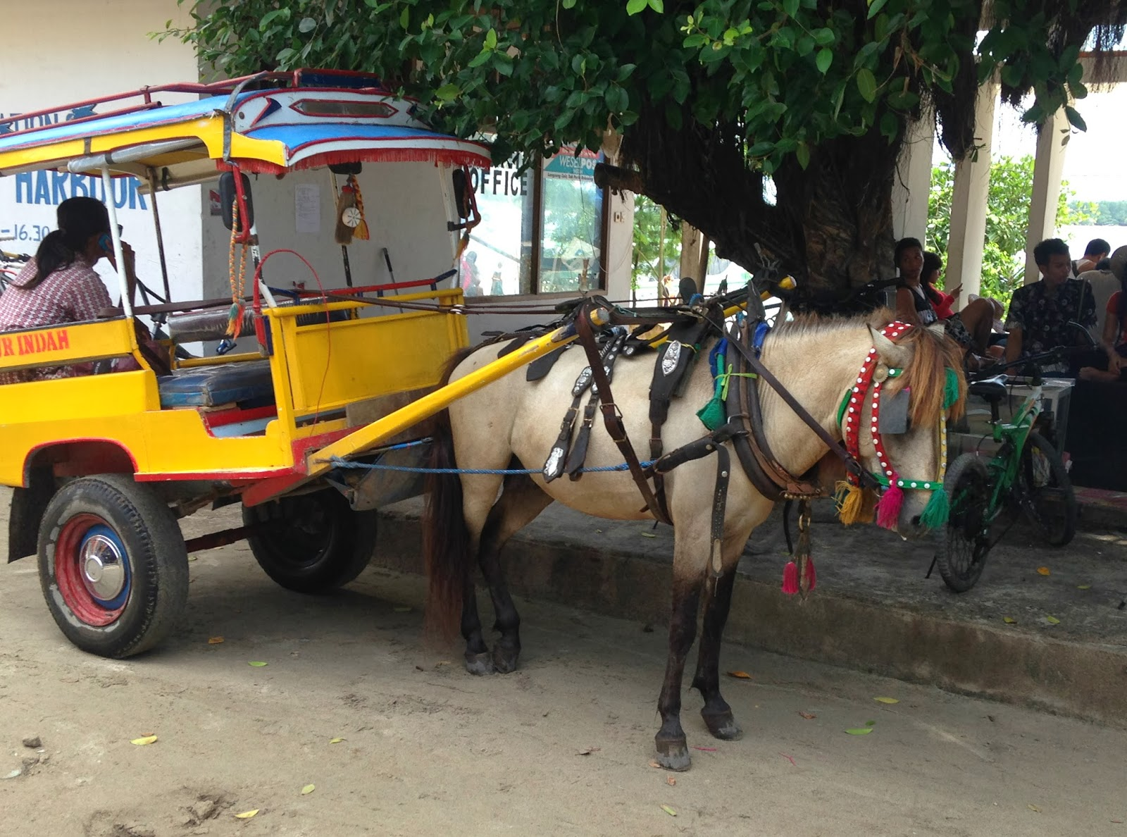 gili carriage horse on gill t indonesia