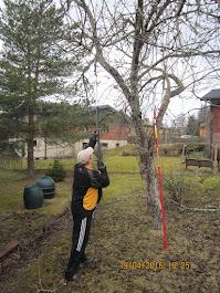 Omenpuiden ymv pihapuiden leikkaukset Tampere Pirkanmaa talousalueella käteisellä