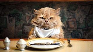 kucing sedang makan