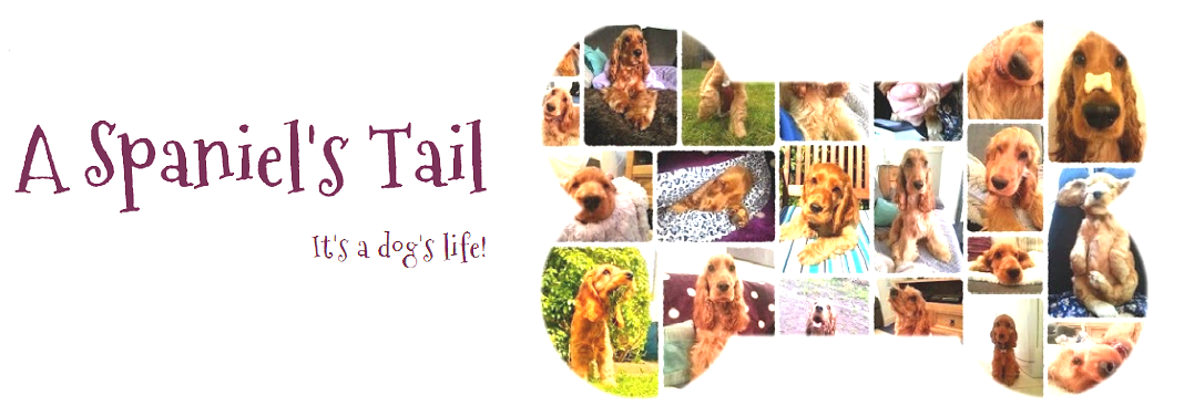 A Spaniel's Tail