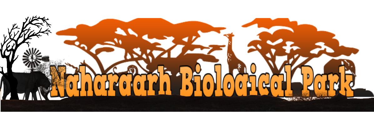 Nahargarh Biological Park Jaipur | Nahargarh Biological Park Safari