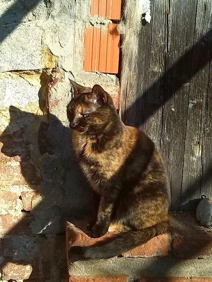 Foto di Luna, la gatta di Wiccan Matrix
