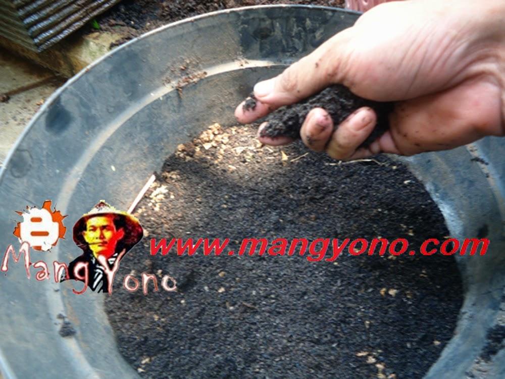 Taburkan pupuk organik atau arang sekam padi secara tipis, kira – kira ketebalan 1 Cm.
