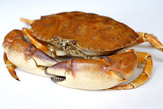 Kepiting Impor
